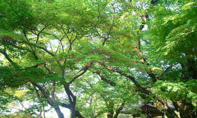 豪徳寺 緑