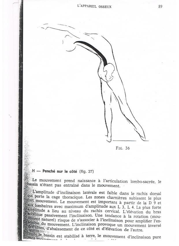 解剖学スケッチ2